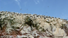 Ballestas Islands in Paracas. Seabirds on the Ballestas Islands Royalty Free Stock Photo