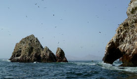 Ballestas Islands in Paracas. Seabirds flying in the Ballestas Islands Royalty Free Stock Image