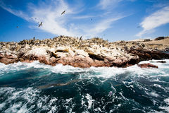 Ballestas Islands, Peru stock images