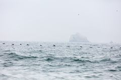 Ballestas Islands, Peru Royalty Free Stock Photo
