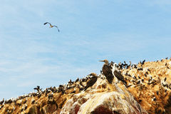 ballestas islas zbliżać paracas Peru przyrody obraz stock