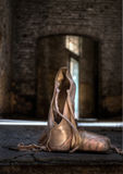 Ballet in Chartreuse Stock Foto