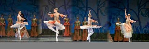 Ballet de lac swan photographie stock