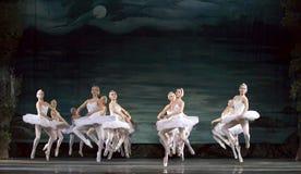 Ballet del lago swan Foto de archivo libre de regalías