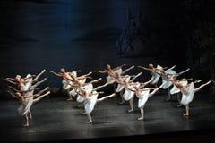 Ballet del lago swan fotografía de archivo libre de regalías