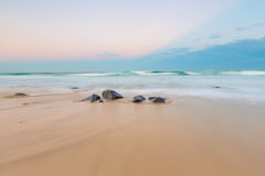 Ballina, NSW, Австралия Стоковое Фото
