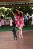 Ballo del cane Fotografie Stock