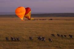 Ballon à air chaud dans le Maasai Mara images libres de droits