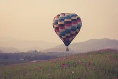 Ballon à air chaud et gisement de fleurs de cosmos Images libres de droits