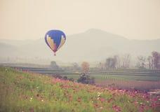 Ballon à air chaud et gisement de fleurs de cosmos Photos libres de droits