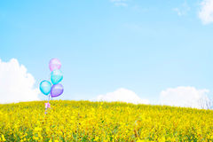 Ballon coloré au-dessus des gisements de fleur jaunes avec le backgro de ciel bleu Images libres de droits