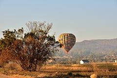 Ballon dans Bush Photo stock
