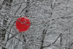 Ballon. In the snowy forest royalty free stock photo