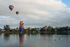 Ballonger över Waikato Arkivbild