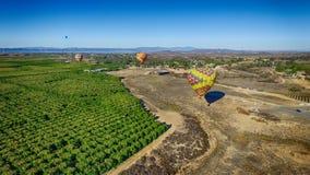 Ballonger för varm luft över ett citrust fält Arkivfoton