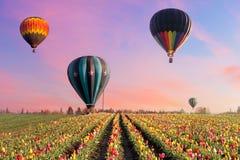 Ballonger för varm luft på Tulip Fields Royaltyfri Fotografi