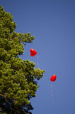 Ballonger flyger in i himlen royaltyfri fotografi
