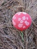 Ballongtapet arkivbild