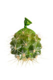 Ballonnets de cactus abstrait Images stock