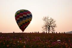 Ballons color?s du gisement de cosmos au coucher du soleil image stock