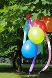 Ballons op de tak van de boom Stock Fotografie