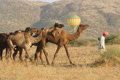 Balloon Above Camel Train Stock Photos