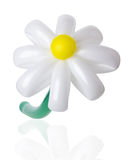 Balloon daisy on the white background Stock Photography