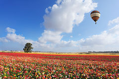 The balloon flies over a field of garden buttercups Royalty Free Stock Image