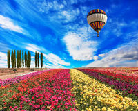 The balloon flies over a field Royalty Free Stock Image