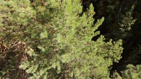 Balloon flight over tree tops stock footage