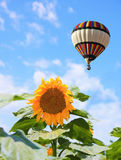 The balloon flying over a field of sunflowers Royalty Free Stock Photos