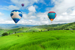 Balloon flying on rice field, Rice field in mountain or rice terrace in the nature, Relax day in beautiful location.  Royalty Free Stock Photos