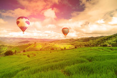 Balloon flying on rice field, Rice field in mountain or rice terrace in the nature, Relax day in beautiful location, rice field Royalty Free Stock Photo