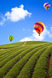 Balloon in Green tea farm Royalty Free Stock Photo
