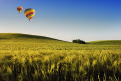 Balloon over the field. Balloon over the summer wheatfield Royalty Free Stock Images