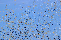 Balloon release Stock Photos