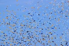 Balloon release. (concept = party, celebrate, etc stock photos