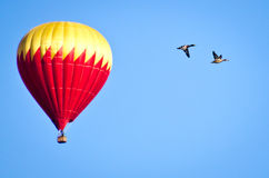 Ballooning with the Ducks Royalty Free Stock Photo