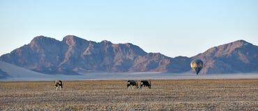 Ballooning nel deserto di Namid-Naufluft, la Namibia Fotografia Stock