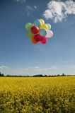 Balloons on canola field Royalty Free Stock Photos