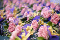 beautiful flower decoration pink carnation Royalty Free Stock Images