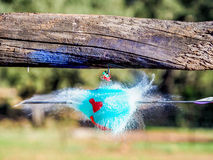 Balloons exploding when hit by an arrow. Closeup hi-speed shot. Royalty Free Stock Images