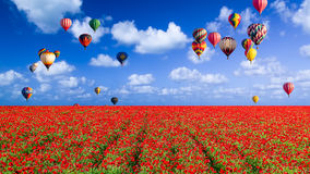 Balloons Floating Over a Poppy Field Royalty Free Stock Image