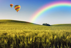Balloons over the field. Balloons over the wheat field Stock Photography