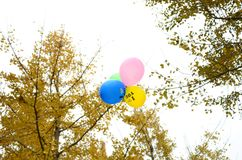 Balloons on the sky Royalty Free Stock Image