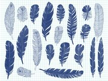 Ballpoint pen drawing bird feathers big set on notebook background. Bird feather drawing sketch, plume elegance, sketching illustration Stock Photo
