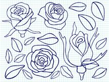 Ballpoint pen drawing roses and leaves. On notebook page. Vector illustration Stock Images