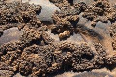 Sand balls crab Royalty Free Stock Image