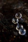 Balls of hydrogel on black metal background. Royalty Free Stock Image