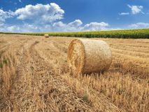 Balls of straw Stock Photography